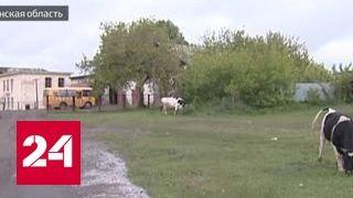 Учитель нашел пропавшую корову по ДНК