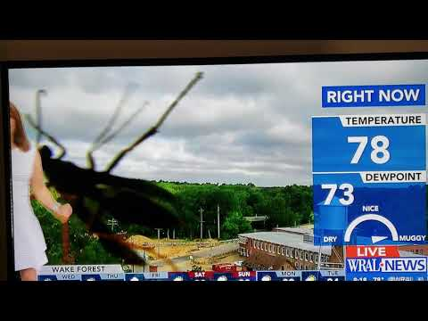 Wral Weather Videos : Instant Video Search
