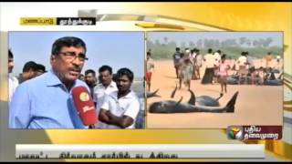 Deep-Sea biologist talks about dolphins washing ashore in Thiruchendur