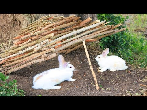 The First Rabbit Trap Using Fall Trap by Clever Boy - How To Trap Rabbit That Works 100%