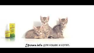 Ветом для кошек и котят.