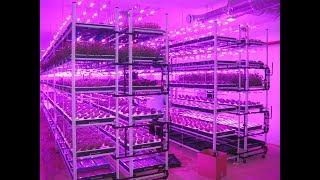 Смотреть видео Технология выращивания зелени методом гидропоники
