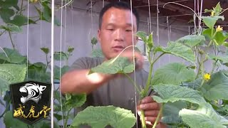 中国老兵在漠河发明特殊种菜方式 大大改善哨所生活条件 「威虎堂」20210106   军迷天下 - YouTube
