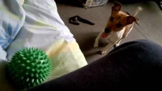 Неугомонная собака