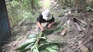 月桃再台灣原住民的社會中相當普遍,主要探討月桃再排灣族的社會中運用...