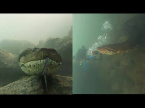 Jake Dill - Diver Comes Face to Face with Giant Anaconda