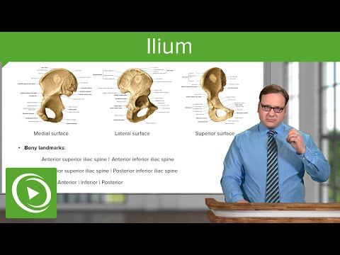 Ilium – Anatomy | Medical Education Videos