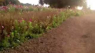 Coworth Park, Blacknest Rd, Ascot, Berkshire SL5 7SE
