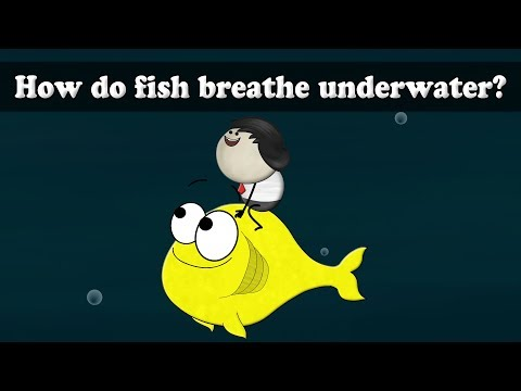 How Do Fish Breathe Underwater? | #aumsum #kids #science #education #children