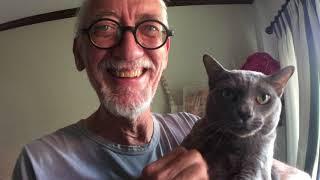 อาการแมวไม่ได้เจอเจ้าหลายอาทิตย์ Korat cat Meeting Owners After Long Time