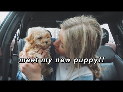 GETTING MY PUPPY! meet my maltipoo + first days home ♡