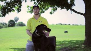 Dog Training - Tulsa Dog Training - Tip Top K9
