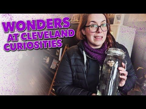 Wonders At Cleveland Curiosities (Lakewood, Ohio)