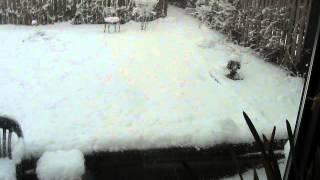 late-afternoon-still-snowing--with-gorecki-s-symphony-no-3-and-dawn-upshaw