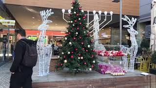 עץ אשוח מוצג במתחם בביג פאשן אשדוד