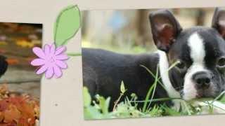 Puppies For Sale Riverside Ca Gorgeous Teacup Pomeranian Puppies My Pomeranians