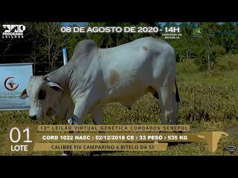 LOTE 01 CORD 1022