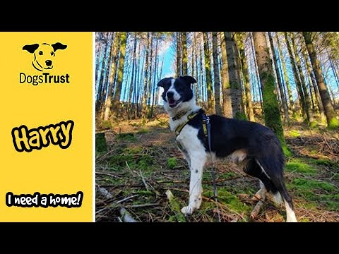 Harry The Border Collie Is A Sweet Boy | Dogs Trust Ilfracombe
