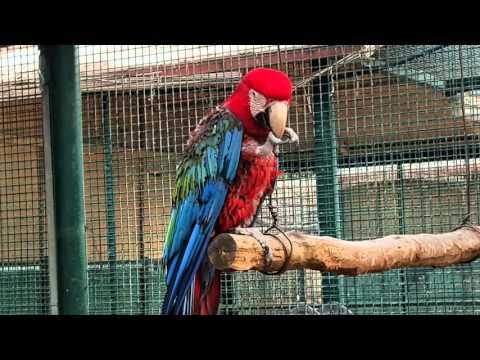 Emirates Zoo - Abu Dhabi