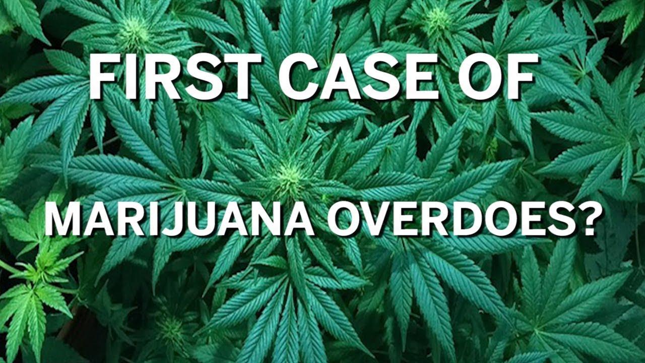 It's true? Colorado doctors claim first marijuana overdose death