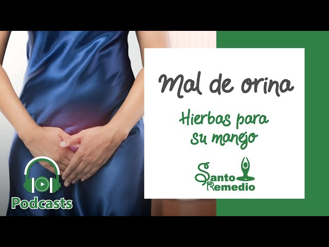 Mal de orina y hierbas para su manejo - Santo Remedio Panamá. Farmacia de medicina natural.