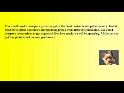 cheapest pet insurance
