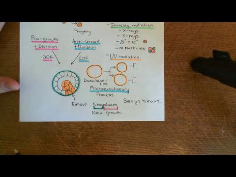 Cancer Development Part 2