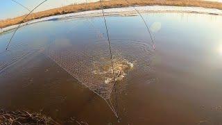 Приехали на разведку а тут рыба- Щуки и караси Разловили дикое место Рыбалка на паук
