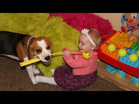 Cute dog and a baby make up their own game ( Charlie the dog)
