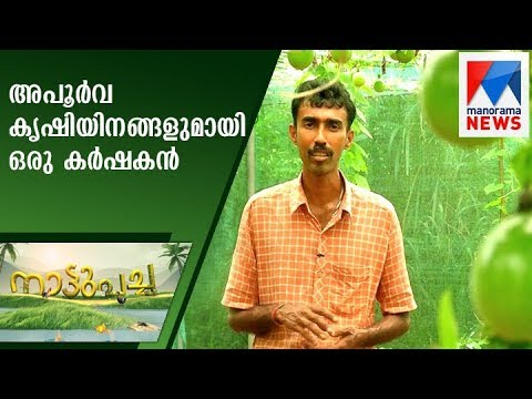 Farmer with rare crop cultivation | Nattupacha   | Manorama News