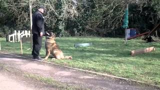 Caucasian Shepherd Dog Training In Ireland