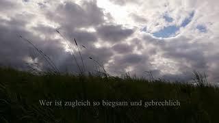 """""""Natur ist glücklich"""" Gedicht von Rainer Maria Rilke, Musik & Film: Linda Trillhaase"""