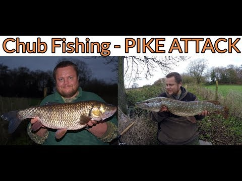 Chub Fishing - PIKE ATTACK! (Video 118)