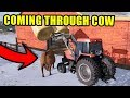 GET OUT OF THE WAY COW! BUYING 35 HEAD OF CATTLE | EP #12 | FARMING SIMULATOR 2017