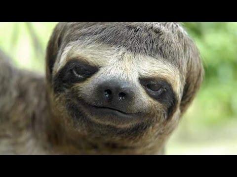 Funny animal videos #2 – Funny animal compilation