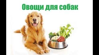 Овощи Для Собак & Какие Овощи Нельзя Собак. Ветклиника Био-Вет