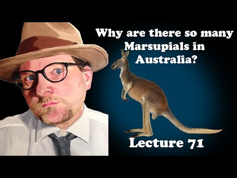 Lecture 71 Why Are There So Many Marsupials In Australia?