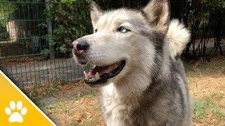 MiezWohnung gesucht Folge 35 | Tierheim Mönchengladbach: Diese Tiere suchen ein neues Zuhause