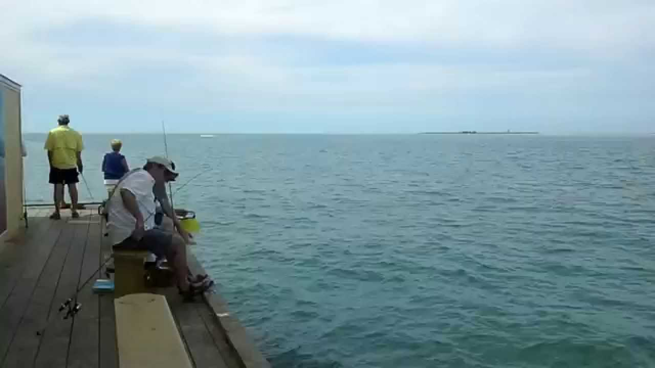 Fishing at rod and reel pier insider tips anna maria for Anna maria island fishing pier