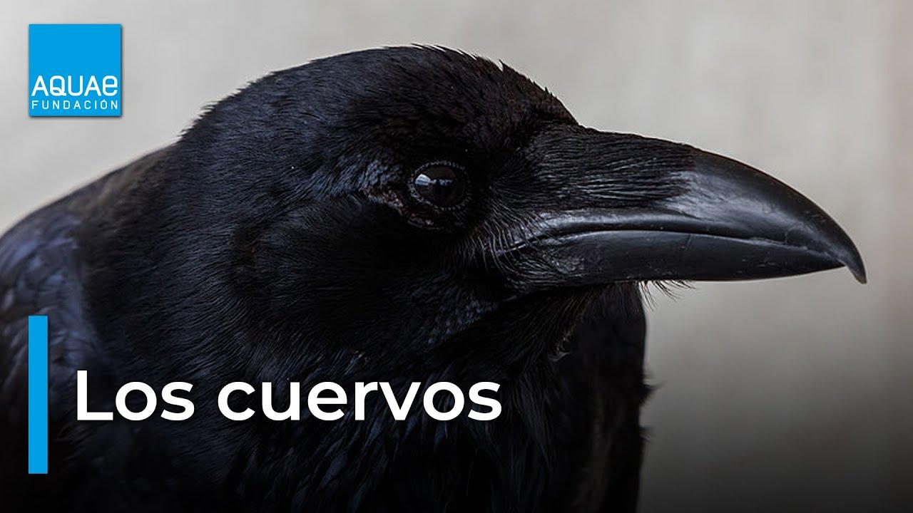 El Cuervo Youtube
