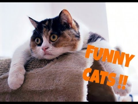 The FUNNIEST RIDICULOUS VIDEOS with CATS! - Extremely FUNNY CAT VIDEOS compilation