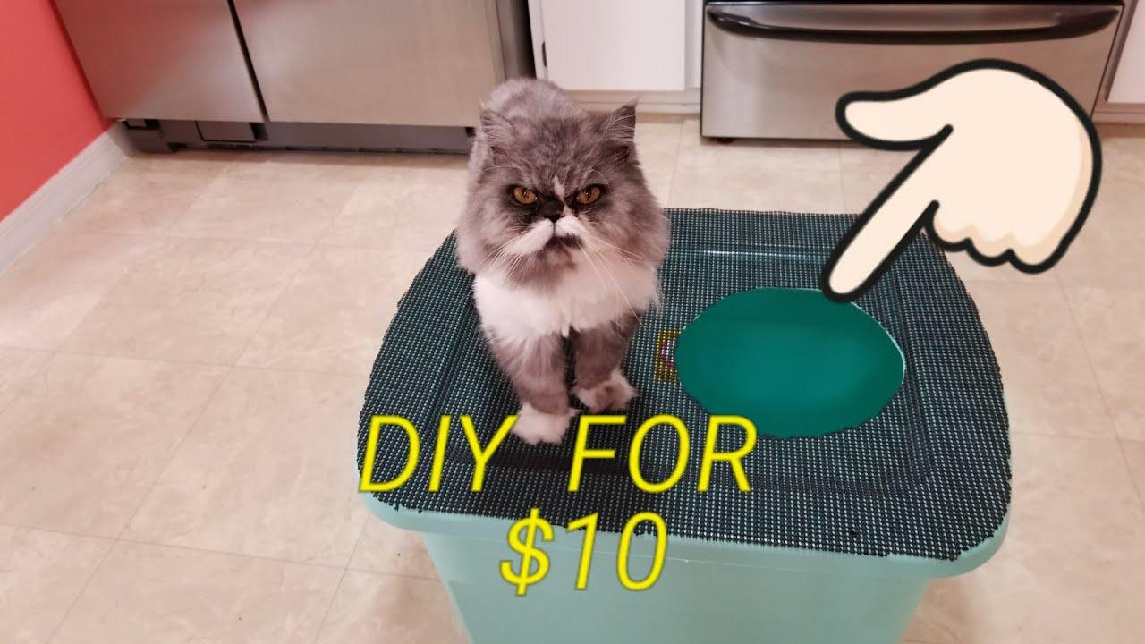 Diy top entry cat litter Box cheap YouTube
