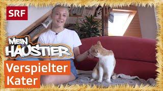 Rea und ihr Kater Giaro | Mein Haustier