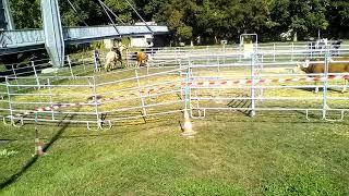 Démo tri de bétail foire expo Verdun