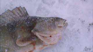 Зимняя Рыбалка 2015 год Кировоградская обл