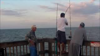 Shark Fishing Sunglow Pier Daytona Beach  October 2013