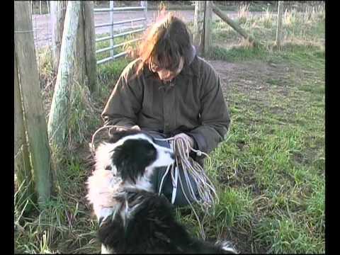 Border Collie Rescue - A Useful Dog - Episode 5