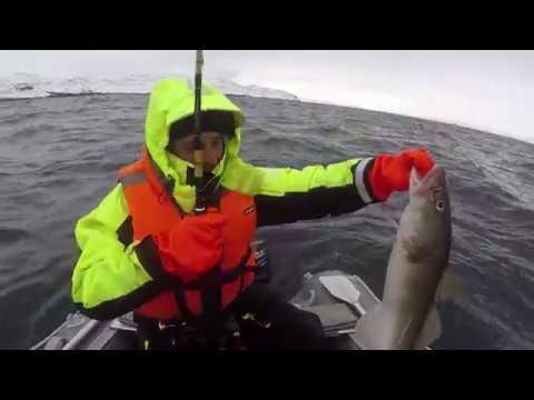 ТРЕСКА. Открытие сезона 2017. Баренцево море. COD. The opening of the season 2017. Barents sea.