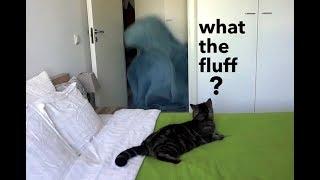 Реакция кота на магическое исчезновение хозяйки; Cat's reaction to what the fluff challenge