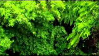 Мудрец Йога Васиштха - Обучение Рамы и полное понимание истинного абсолюта. 018